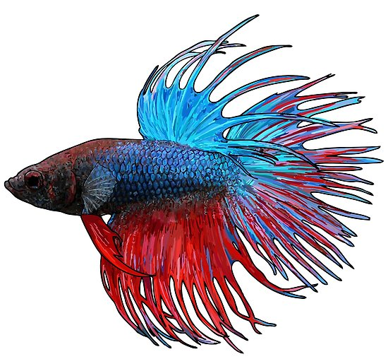 Kempvis crowntail
