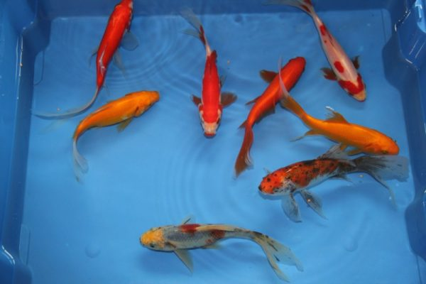 Vissen bestellen