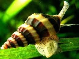 Slakken etende slak